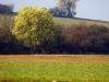 umgebung-laudenbach-imgp1481-ps