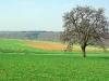 umgebung-laudenbach-imgp4913-ps