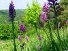 umgebung-laudenbach-orchidee-imgp3099-ps